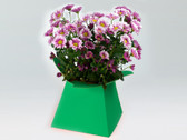 Brightly coloured posy flower boxes multipack