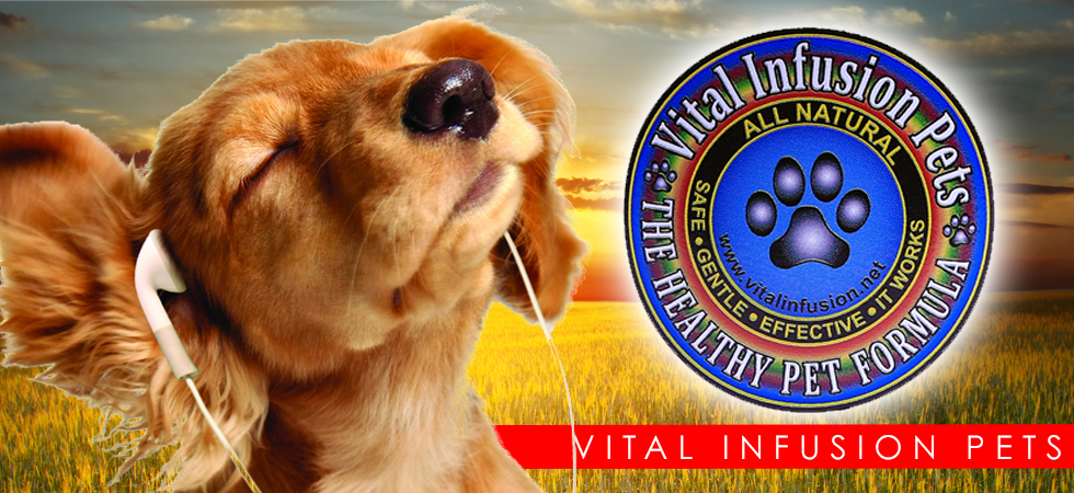 vital infusion pets