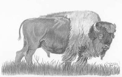 Buffalo Pencil Sketch by Craig Cassell, a quadraplegic artist who draws with his mouth.