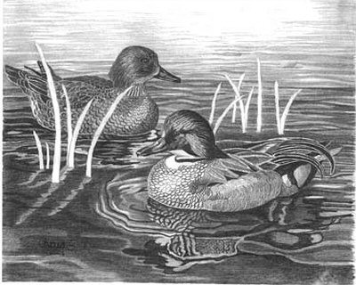 Ducks Pencil Sketch by Craig Cassell, a quadraplegic artist who draws with his mouth.