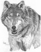 Wolf Pencil Sketch by Craig Cassell, a quadraplegic artist who draws with his mouth.