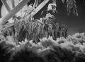 Murder At The Vanities (1934) DVD