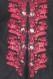 Men's Steampunk red tailcoat KENTZ