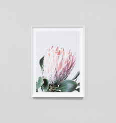 NATIVE PROTEA