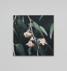 EUCALYPTUS BLOSSOM SQUARE CANVAS