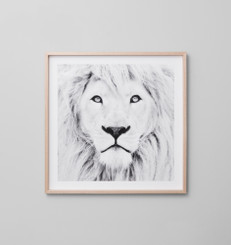 Winter Lion Grey
