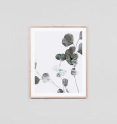 Eucalyptus Branch 1