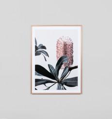 Banksia Portrait 2