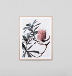 Banksia Portrait 1