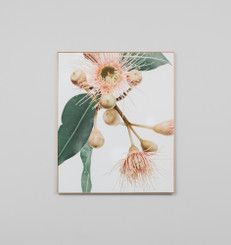 Eucalyptus Flower 1 Canvas