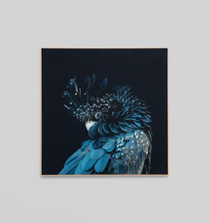 Australian Cockatoo Framed Canvas
