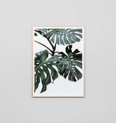 Monstera Portrait