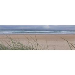 COOLUM BEACH GRASS  - LONG