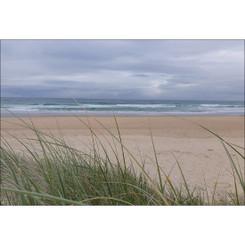 COOLUM BEACH GRASS