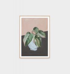 Plant Study Blush 1