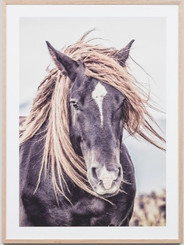LONE MUSTANG FRAMED PRINT  Proudly designed and made in Australia with love.   Please allow 1-3 weeks manufacturing time, as this product is made to order.  Materials : framed print behind glass  Dimensions : 85CM x 115CM