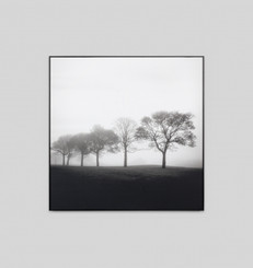 MISTY TREE 1 FRAMED CANVAS