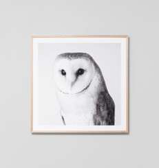 Barn Owl Grey