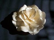 Champagne Rose Bridal Veil Accessory Hair Flower Wedding Dress Sash