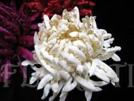Ivory Mum French Silk Flower Bridal Hair Accessory Wedding Dress Pin