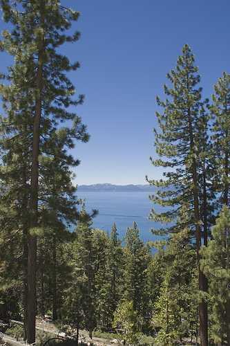 lake-tahoe-trees.jpg