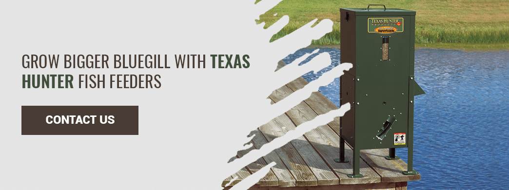grow bigger bluegill with Texas Hunter Products fish feeders