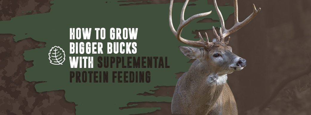 grow bigger bucks