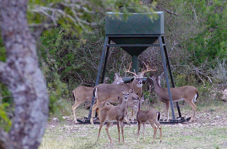 3 Ways To Improve Your Deer With Protein Texas Hunter