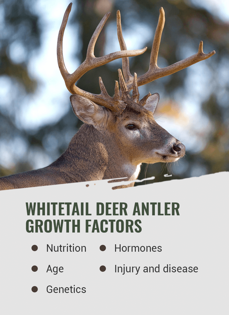 deer antler growth factors