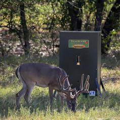 deer feeders automatic deer feeders texas hunter products rh texashunterproducts com