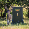 Texas Hunter Hideaway Stand and Fill Deer Feeder