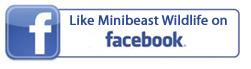 fb-mbw-button.jpg