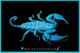 A Rainforest Scorpion fluorescing under ultra-violet (UV) light.