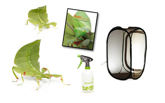 Australian Leaf Insect Complete Kit - Save over 10%