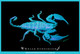 An image of a Rainforest Scorpion fluorescing using the illumination of the Compact UV LED Torch