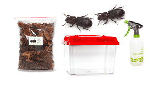 Bess Beetle Kit - save 10%