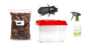 Giant Bess Beetle Kit - save 10%