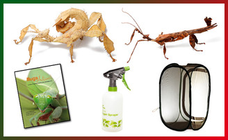 Spiny Leaf Insect Christmas Kit - Save 20%
