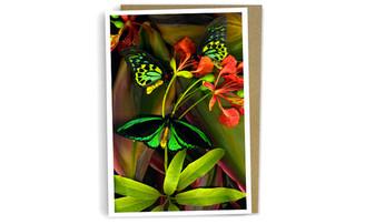 Three Birdwings