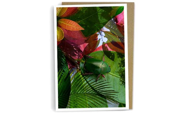 Christmas Beetle Leaf
