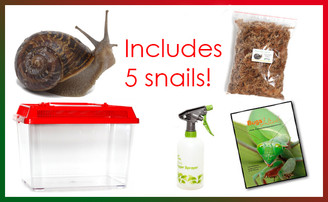 Garden Snail Christmas Kit