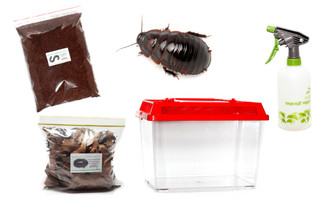 Giant Burrowing Cockroach Kit - save 10%