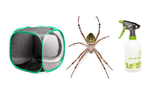 Painted St. Andrew's Cross Spider Kit - Save over 15%