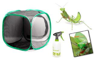 Giant Rainforest Mantid Complete Kit