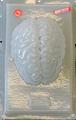 Brain / Cerebro