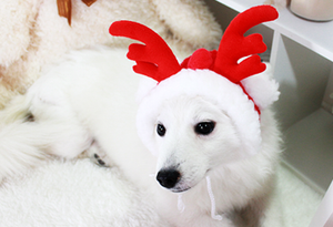 Rudolf the Reindeer Winter Hat