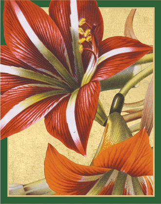Bridge Tallies Amaryllis