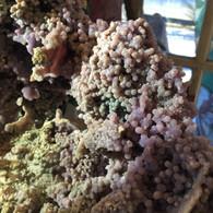 Bortryoidal Chalcedony Large Specimen, (Grape Agate), Manakarra Beach, West Sulawesi, Indonesia