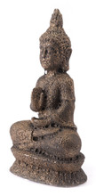 Buddha Brown, 16474