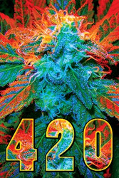 Image for 420 Poster